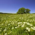 prairie_en_fleurs
